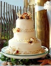 Wedding cakes by tanis panama city beach florida seashell cake junglespirit Image collections